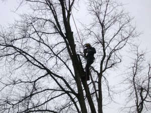 Aspen Tree Surgeons Glasgow - Tree Pruning Service