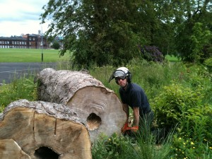 Aspen Tree Surgeons Glasgow - Tree Surgery Site Clearance