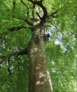 Aspen Tree Surgery Glasgow - Tree Background Image