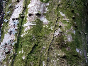 Aspen Tree Surgeons Glasgow Treat Diseased Trees